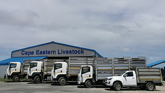 Livestock removal vehicles and trailers